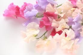 菊池 蘭さんのアイキャッチ画像